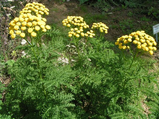 Anfragen for Pflanzen laden berlin
